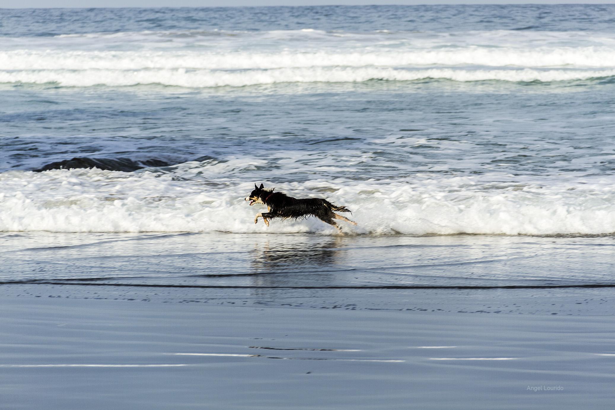 playa de las catedrales mascotas